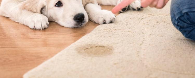 Dog Urine Removal Service